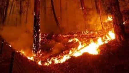 Κλιματική αλλαγή και πυρκαγιές στην Αυστραλία-Ανακοίνωση της Ορθόδοξης Αρχιεπισκοπής